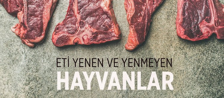 Eti yenen hayvanlar hangileridir? Eti yenmesi haram olan hayvanlar hangileridir? Yırtıcı hayvanları yemek haram mıdır?