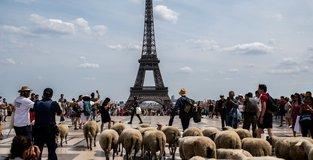 Sheep tour around Paris to boost urban farming