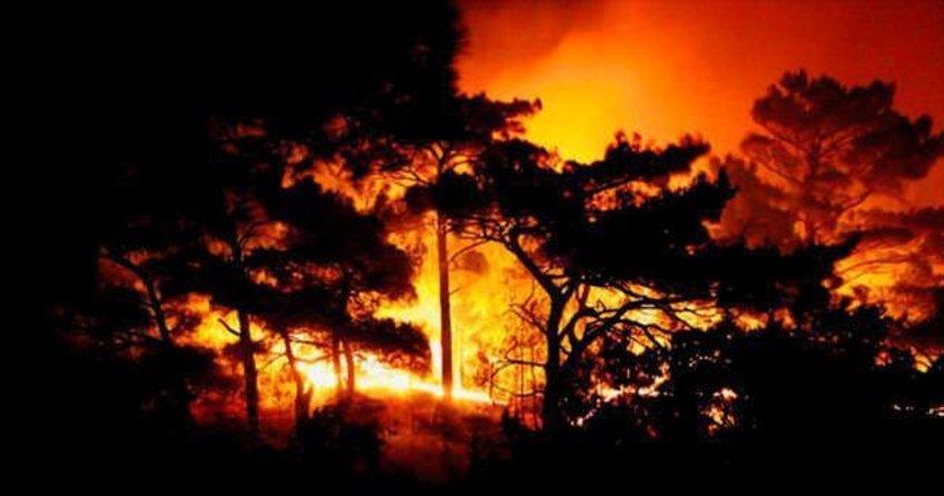 Piknik ateşi 40 hektarı kül etti