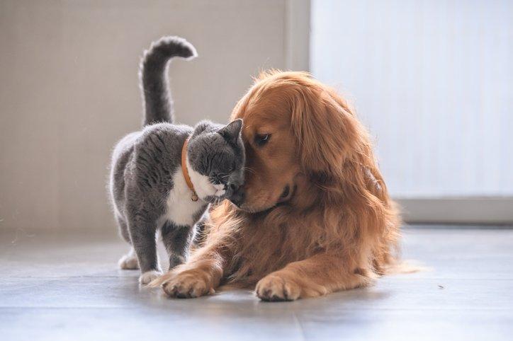 Evde evcil hayvan besleyenler için öneriler