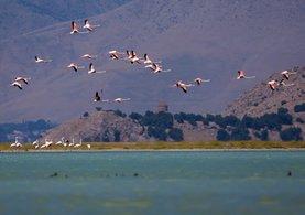 Van Gölü havzasındaki flamingolar görsel şölen sunuyor
