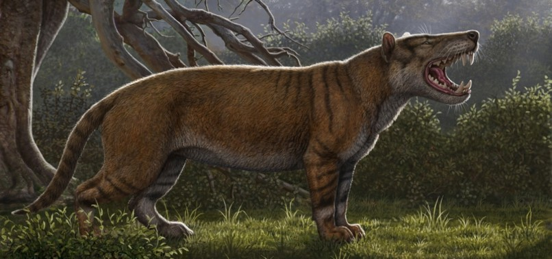 RESEARCHERS DISCOVER ANCIENT GIANT LION FOSSIL IN KENYA