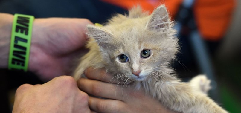US AGRICULTURE DEPARTMENT SHUTS LAB WHERE 3,000 KITTENS SLAUGHTERED FOR DECADES