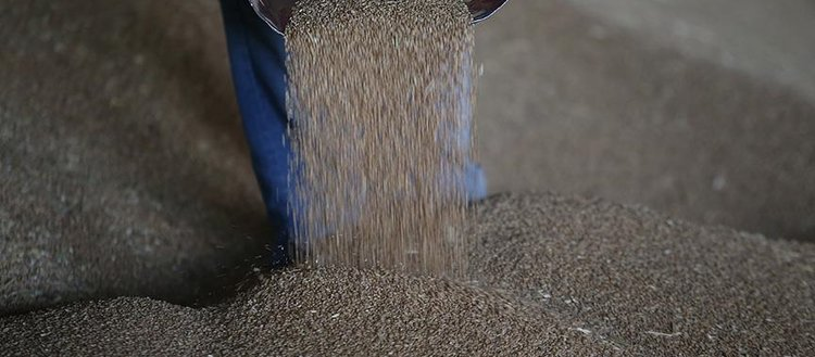 'Buğday üretimi ihtiyacı karşılamaya yetiyor'