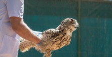 Wild animals get the best care at Şanlıurfa rehab