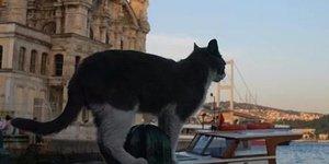 İstanbulun Kedileri Washingtonda