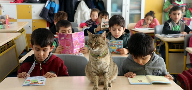 TARÇIN THE CAT GOES TO PRIMARY SCHOOL IN AMASYA
