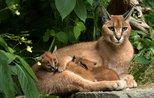 15 wild animals found in Turkey