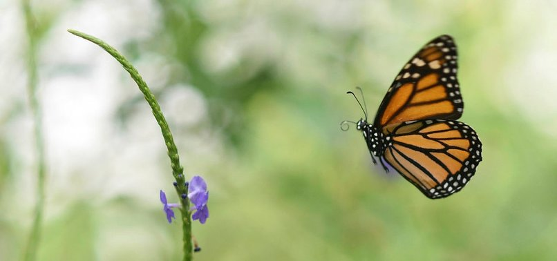 HALF A MILLION INSECT SPECIES FACE EXTINCTION: SCIENTISTS