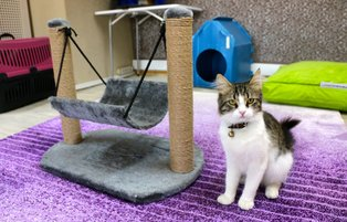 Cats pampered at five-star cat hotel in Turkey