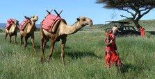 New coronavirus strain kills hundreds of camels in Kenya