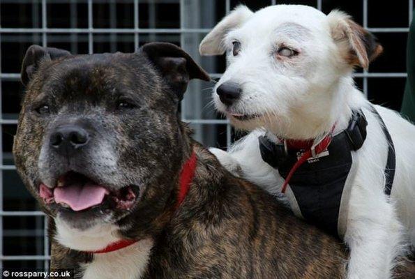 Birlikte Terk Edilen İki Köpeğin Sıradışı Dostluğu