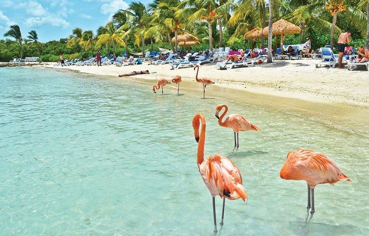 Havaların soğuduğu bugünlerde sıcak bir yerde tatil yapmak isterseniz Aruba'yı bir kenara not edin. Hollanda Krallığı'na bağlı bir ada ülkesi olan Aruba'da deniz tatilinin yanı sıra, inanması zor ama çöl safarisi bile yapabilirsiniz.
