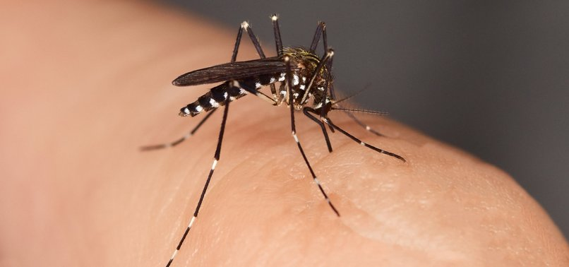 INVASIVE TIGER MOSQUITO REAL THREAT FOR EUROPE: EXPERTS