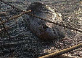 12 metrelik dev balina Hatay'da kıyıya vurdu