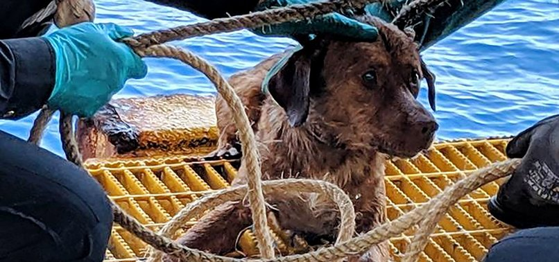RESCUER TO ADOPT DOG PULLED FROM SEA 220-KILOMETERS OFF THAILAND COAST