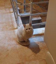 Ankara Keçiören'de kedi buldum.