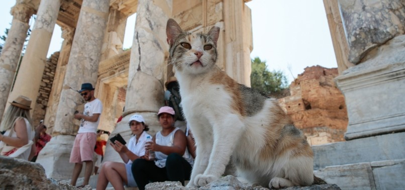CATS OF EPHESUS STROLL THROUGH RUINS, WELCOME TOURISTS