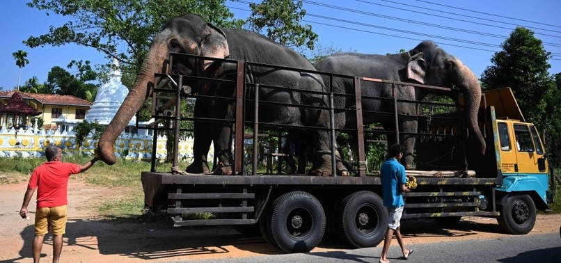 ASIAN ELEPHANT IN ARGENTINA PACKS TRUNK FOR LONG TRIP TO BRAZIL