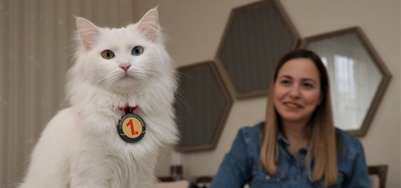 TURKISH TEACHER SPEAKS OF LIFE AFTER ADOPTING SPAK THE VAN CAT