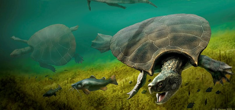 GIANT BATTLE TURTLE FOSSIL UNEARTHED IN SOUTH AMERICA