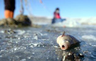 Eskimo-style ice fishing on frozen Lake Çıldır turns into a popular outdoor activity
