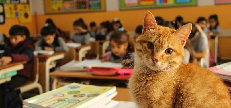 TOMBI 'THE CLASSROOM CAT' RETURNS TO TURKISH SCHOOL AFTER BRIEF LEAVE ON PARENT COMPLAINT