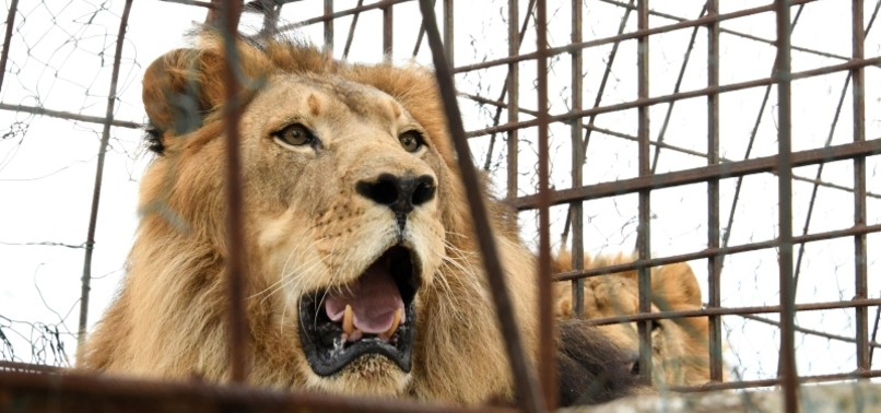 INTERN KILLED BY LION AT US ANIMAL PARK