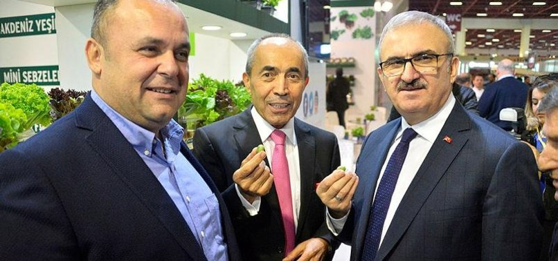 Turkish firm produces olive-sized watermelons