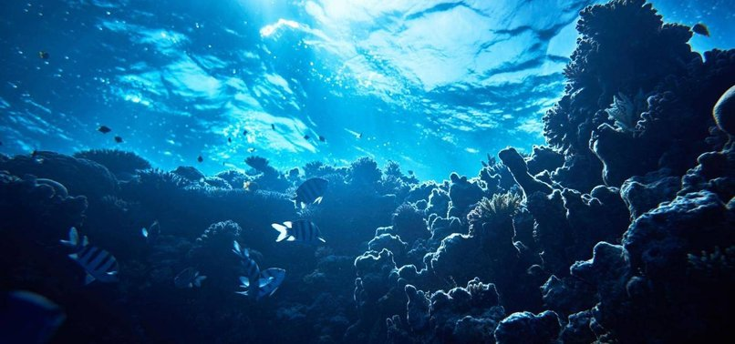 GLOBAL WARMING MAY REDUCE MARINE LIFE BY 17 PCT, STUDY SAYS
