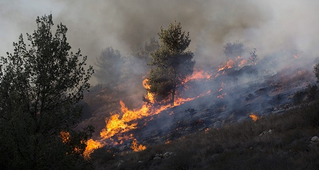 A forest fire in Nataf near Jerusalem, Israel, 23 November 2016. (EPA Photo)