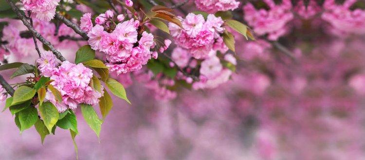 Bahar renkleri ile bezenen İstanbul koruları