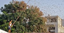 India faces worst locust outbreak in nearly 3 decades