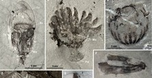 Scientists find 518M-year-old marine fossils in China