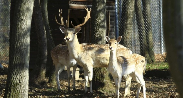 Protected species released to wild