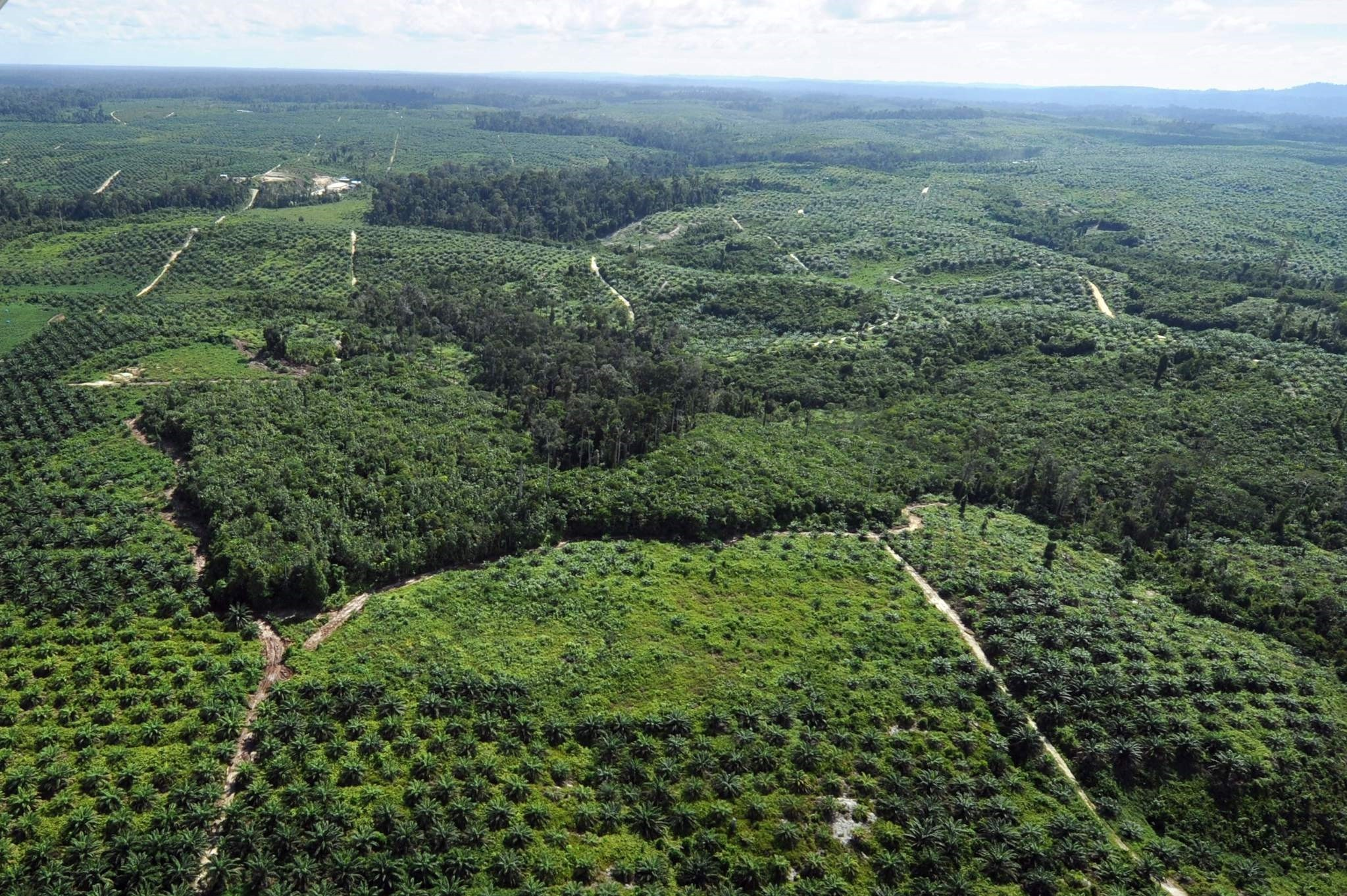 This file picture taken on June 7, 2012 shows a palm oil plantation that has been carved out from a forest in central Kalimantan province in Indonesia's Borneo island. (AFP Photo)