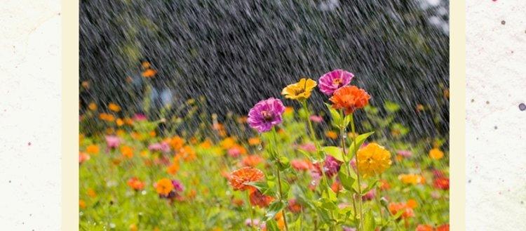 Nisan yağmuru faydalı mı? Nisan yağmuru ne zaman...