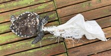 Sea turtle killed by plastic sack in Turkey's Bodrum