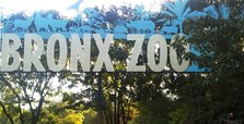 Tiger tests positive for coronavirus at New York zoo