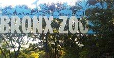 Tiger tests positive for coronavirus at New York zoo