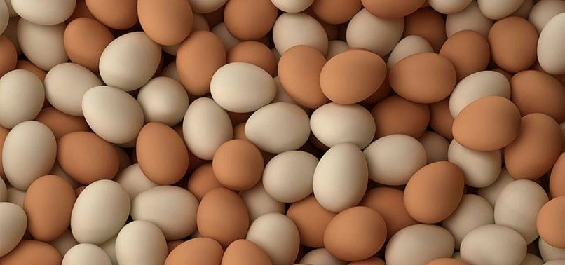 TURKISH EGG PRODUCERS MOVE TO ENTER US MARKET