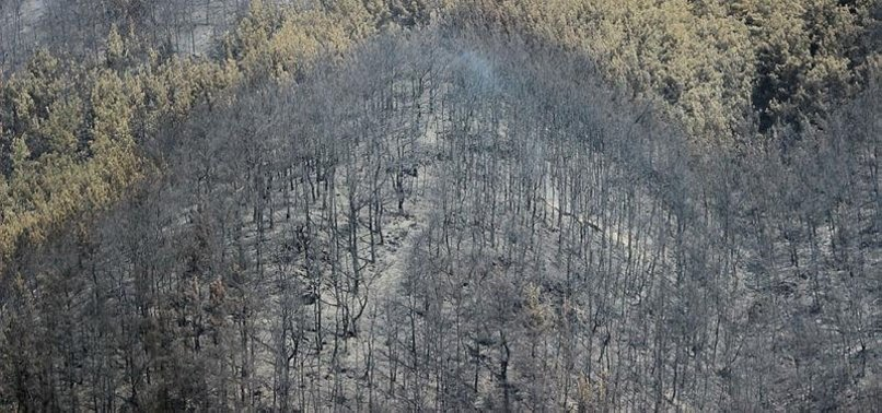 BURNED FORESTS NOT TO BE OPEN FOR CONSTRUCTION: TURKISH MINISTER