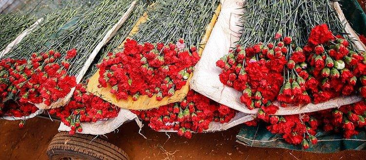 Çiçekçilerin hedefi 2019'da 85 ülkeye ihracat