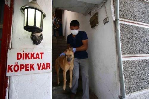 Evden ölü ve can çekişen köpekler çıktı