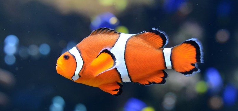 LIGHT POLLUTION PUTS FISH SPECIES AT RISK