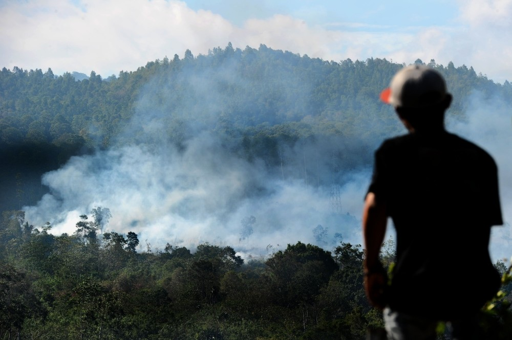 Forests in Indonesia are being cleared for palm oil and pulpwood plantations.