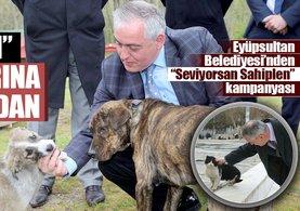 Köpek katliamı iddialarına Eyüpsultan Belediyesi'nden yanıt