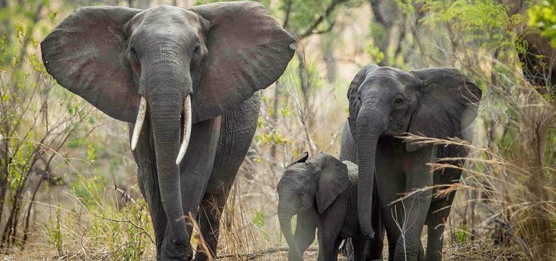 UN BANS BRINGING AFRICAN ELEPHANTS FROM WILD TO ZOOS