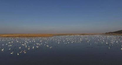 تحتضن حديقة وبحيرة غالا الوطنية بولاية أدرنة شمال غربي تركيا، أكثر من 44 ألف طير.  وقال الدكتور