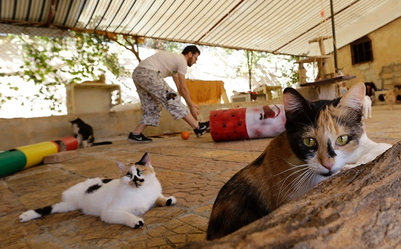 A Syrian volunteer walks amidst animals at a farm-turned-shelter run by the Syrian Team for Animal Rescue (STAR), in Sahnaya. (AFP Photo)